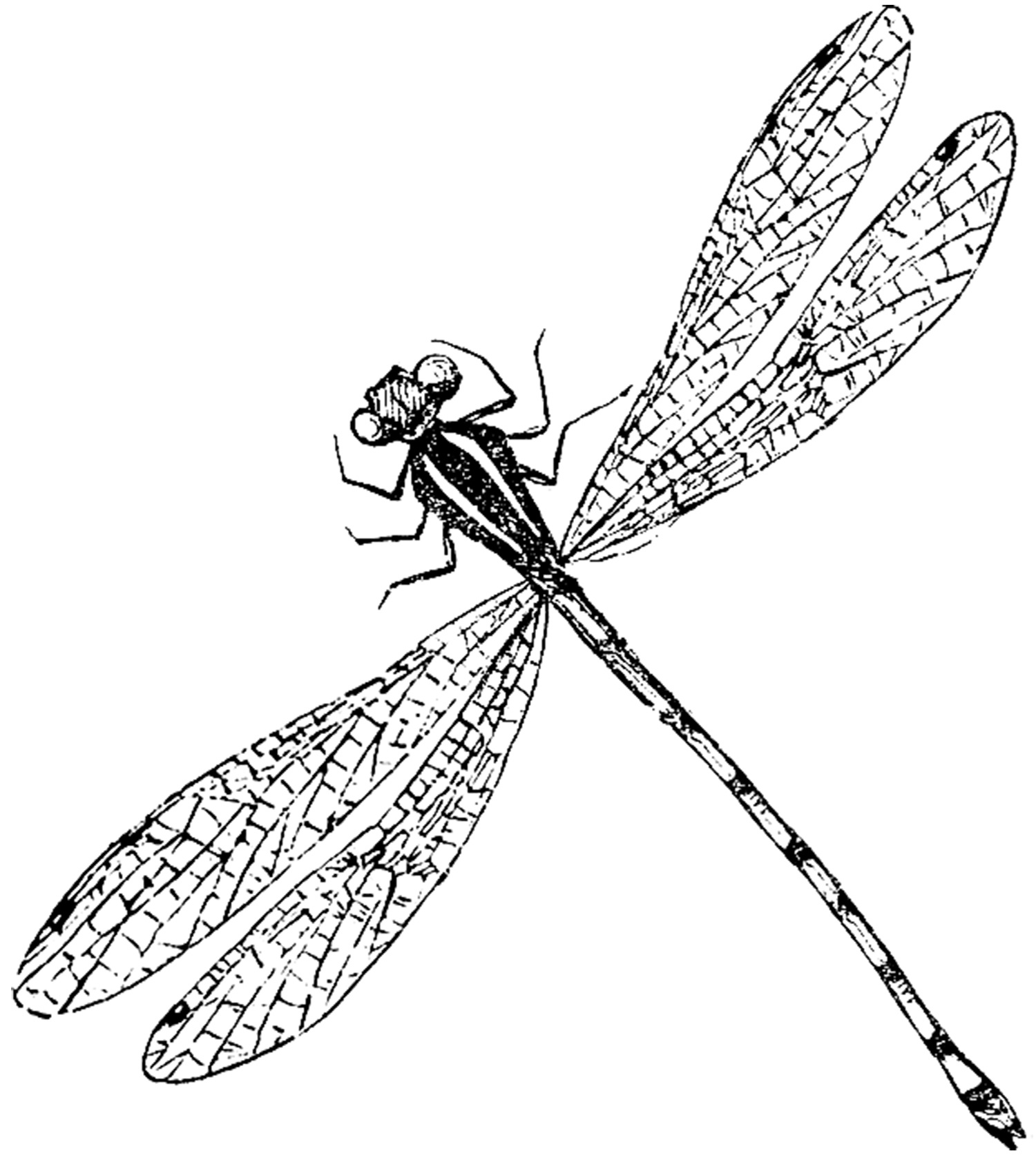 6 Dragonfly Images! - The Graphics Fairy - Free Printable Pictures Of Dragonflies
