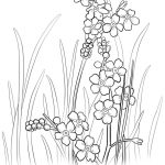 Alaska State Flower Coloring Page   Free Printable Coloring Pages   Free Printable Pictures Of Alaska