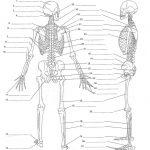 Anatomy Labeling Worksheets   Google Search | I Heart Anatomy   Free Printable Human Anatomy Worksheets