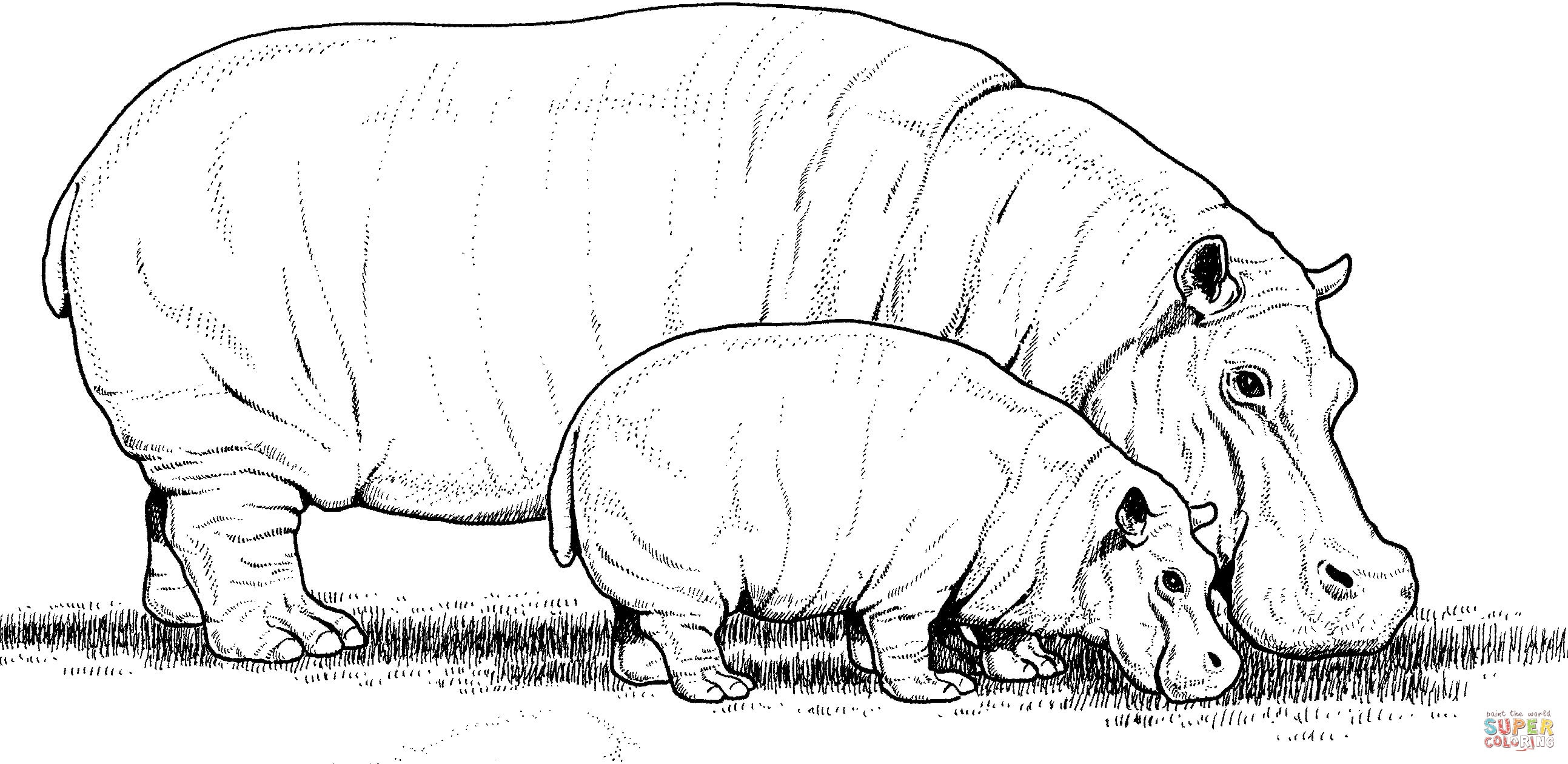 Baby Hippo With Mother Coloring Page | Free Printable Coloring Pages - Free Printable Hippo Coloring Pages