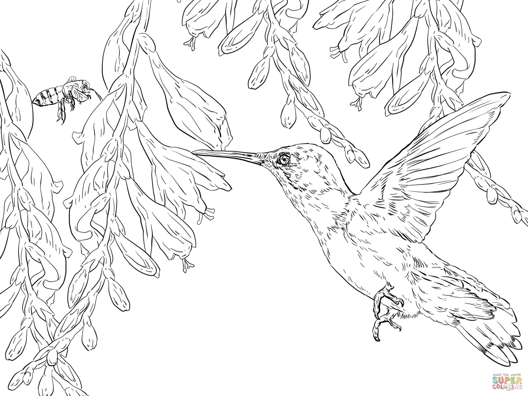 Bee Hummingbird Coloring Page | Free Printable Coloring Pages - Free Printable Pictures Of Hummingbirds