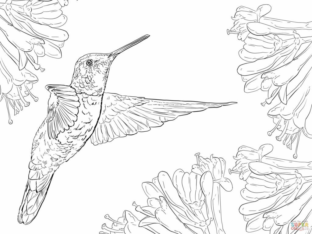 Coloring Book World ~ Coloring Book World Hummingbird Page - Free Printable Pictures Of Hummingbirds