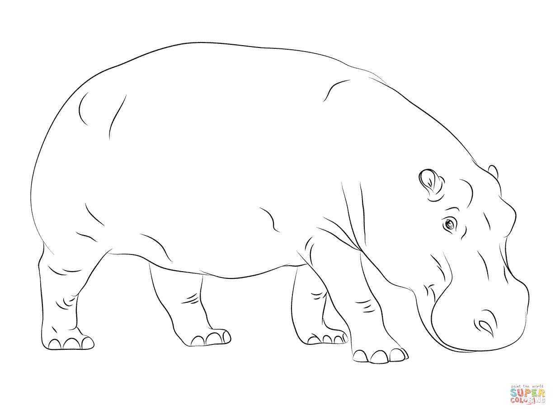 Cute Hippopotamus Coloring Page   Free Printable Coloring Pages - Free Printable Hippo Coloring Pages