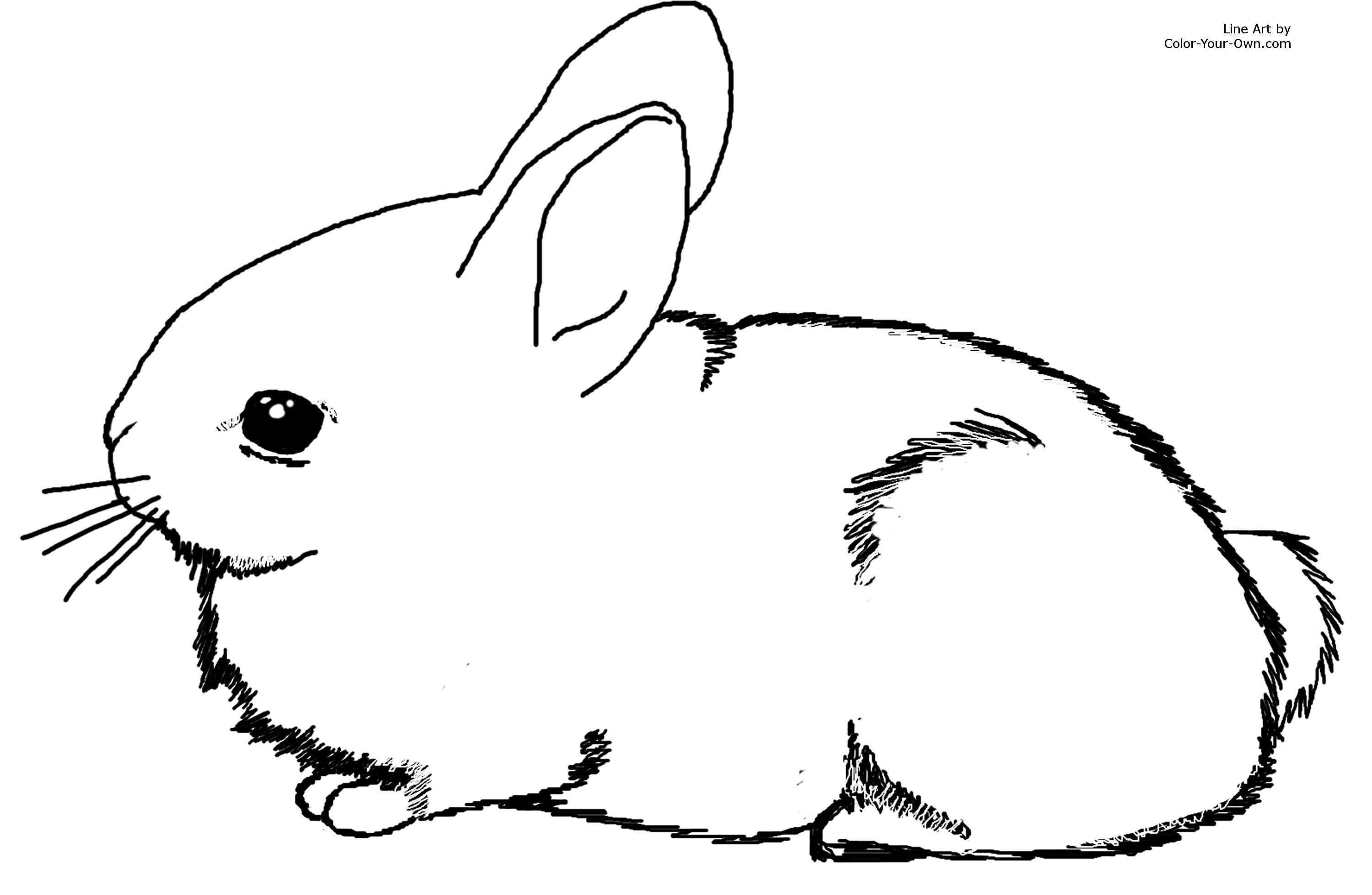 Free Printable Bunny Rabbit Coloring Pages For Kids To Print And - Free Printable Bunny Pictures