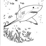 Free Printable Shark Coloring Pages For Kids   Free Printable Great White Shark Coloring Pages
