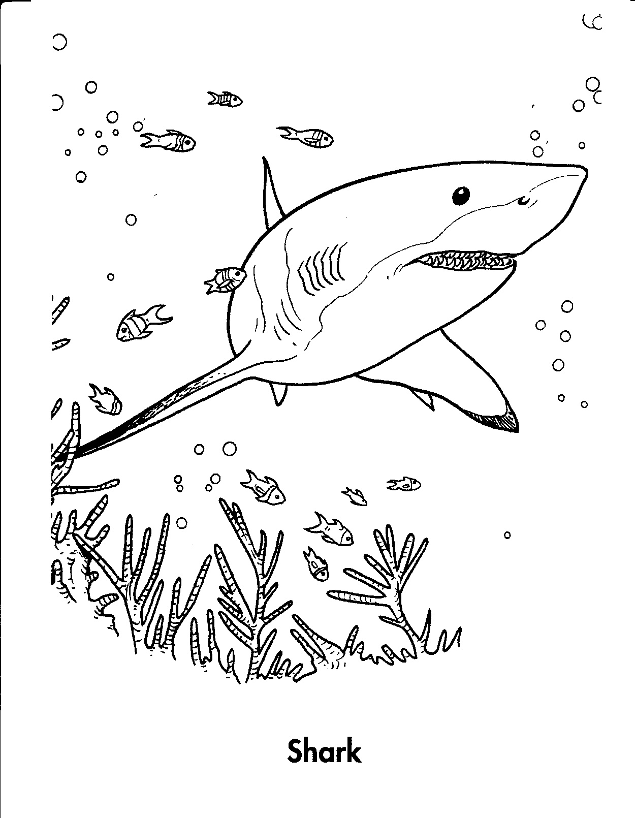 Free Printable Shark Coloring Pages For Kids - Free Printable Great White Shark Coloring Pages