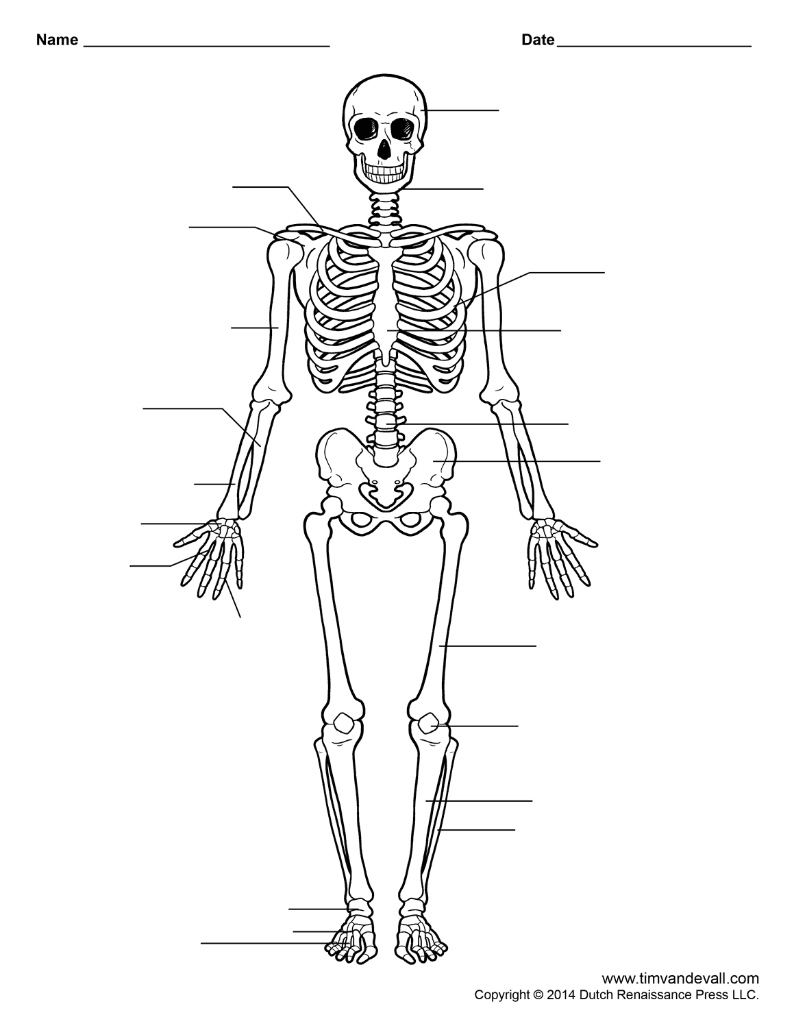 Human Skeleton Worksheet | Homeschool-Science | Human Skeleton - Free Printable Human Anatomy Worksheets