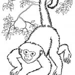Monkeys To Print For Free   Monkeys Kids Coloring Pages   Free Printable Monkey Coloring Sheets