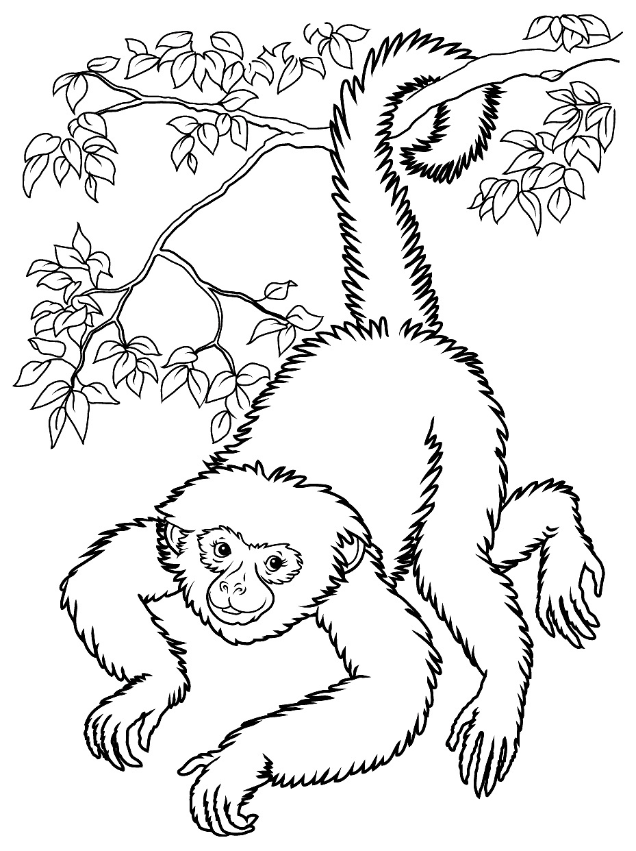 Monkeys To Print For Free - Monkeys Kids Coloring Pages - Free Printable Monkey Coloring Sheets