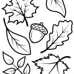 New Leaf Pictures To Color Fall Leaves And Acorn Coloring Page Free   Acorn Template Free Printable