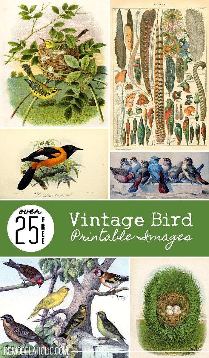 Over 25 Free Vintage Bird Printable Images   Remodelaholic - Free Printable Vintage Art