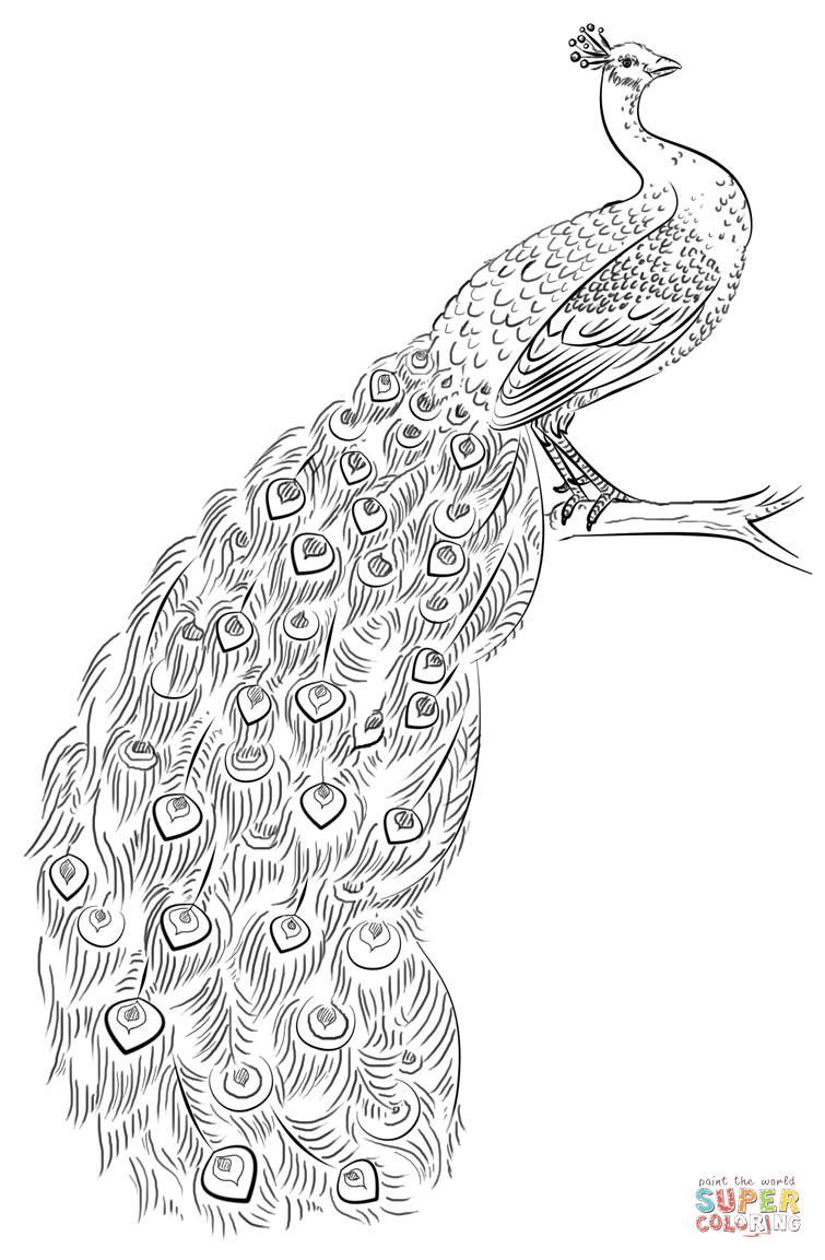 Peacock Coloring Page | Free Printable Coloring Pages | Coloring - Free Printable Peacock Pictures