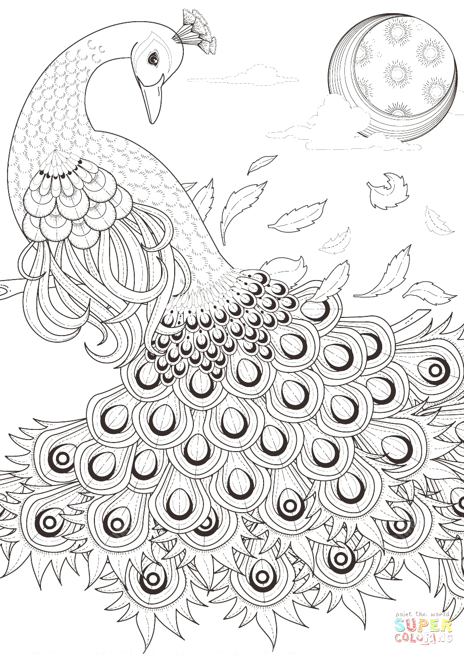 Peacock Coloring Sheet #1541 - 554×565 | Gotocoloring - Free Printable Peacock Pictures