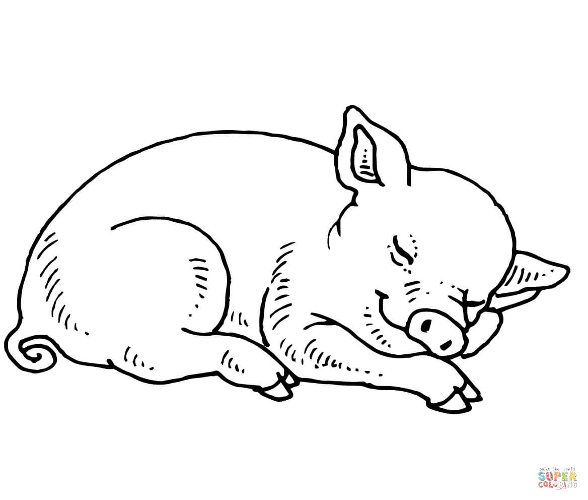 Pig Coloring Pages   Free Coloring Pages - Pig Coloring Sheets Free Printable