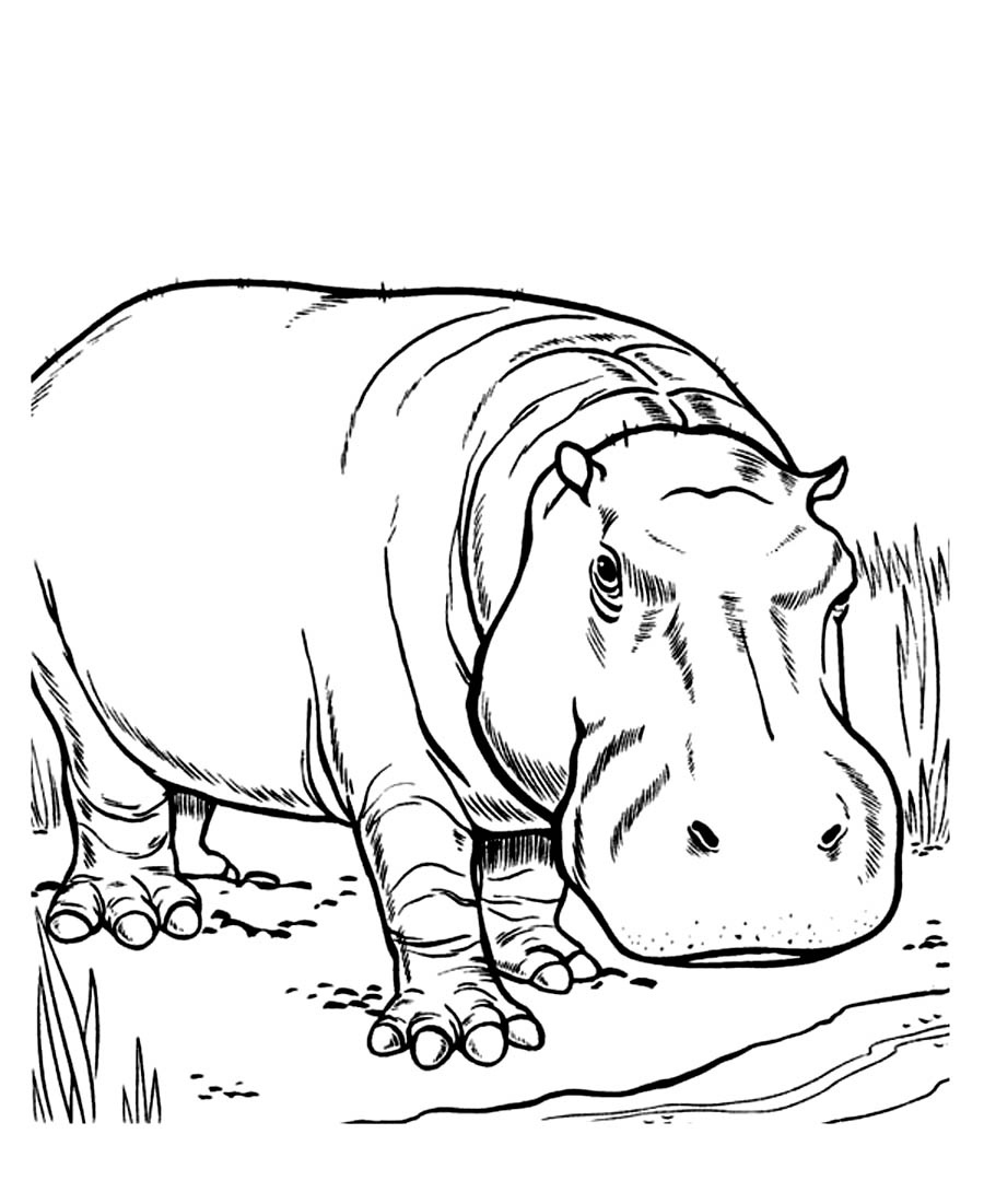 Printable Hippo Coloring Pages | Coloringme - Free Printable Hippo Coloring Pages