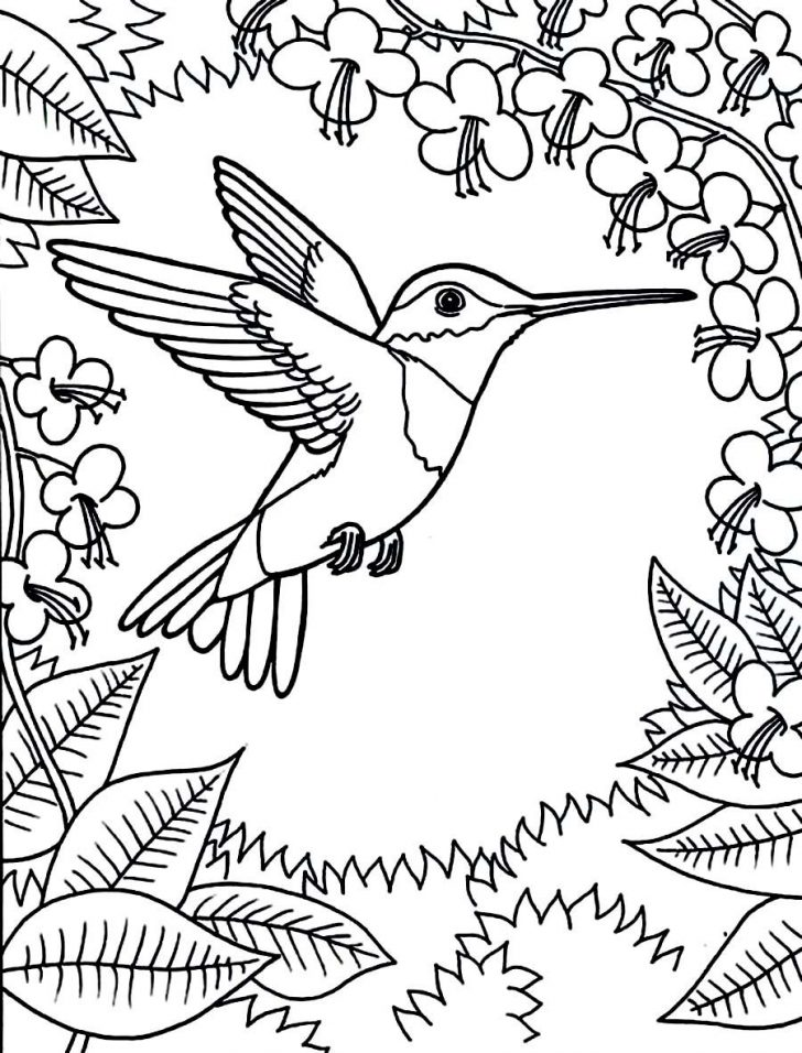 Free Printable Pictures Of Hummingbirds