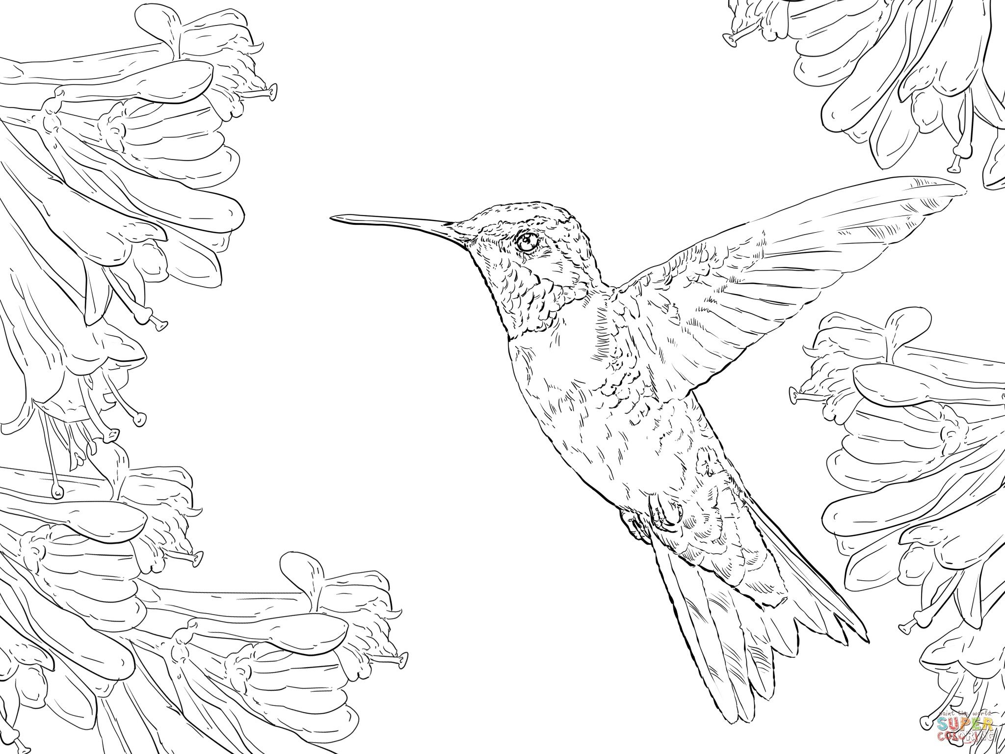 Realistic Ruby Throated Hummingbird Coloring Page | Supercoloring - Free Printable Pictures Of Hummingbirds