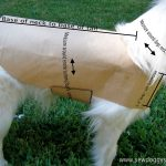 Sew Doggystyle: Diy Pet Coat Pattern   Free Printable Dog Coat Sewing Patterns