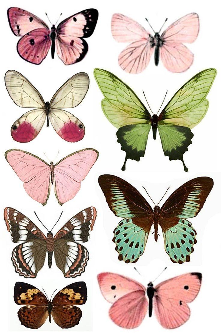 Shtampomaniya: Free Printables. Butterflies. | Butterflies - Free Printable Butterfly Pictures