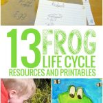 13 Frog Life Cycle Resources And Printables   Teach Junkie   Life Cycle Of A Frog Free Printable Book