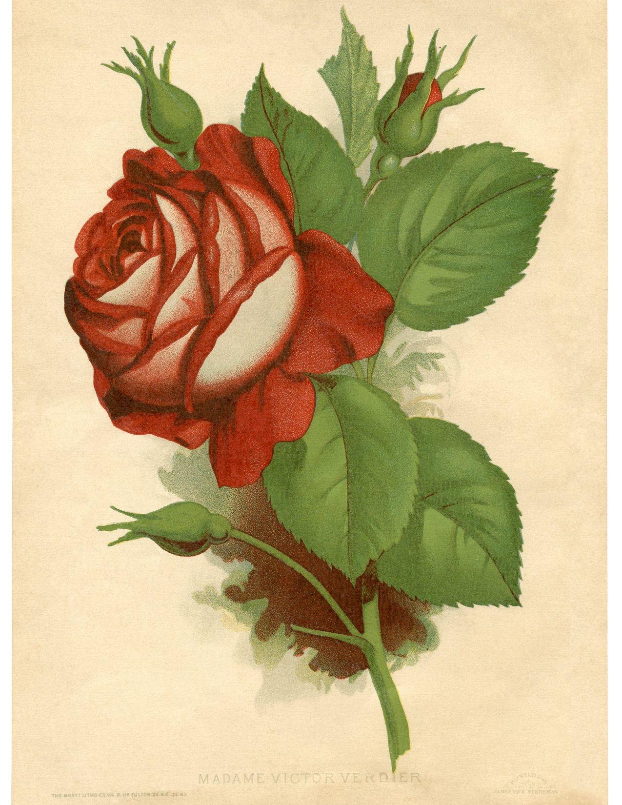 50 Free Wall Art Printables! | Images | Printable Wall Art - Free Printable Roses