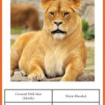 Animal Classification Cards » One Beautiful Home   Free Printable Animal Classification Cards