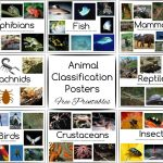 Animal Classification Posters And Games   Free Printables   Free Printable Animal Classification Cards