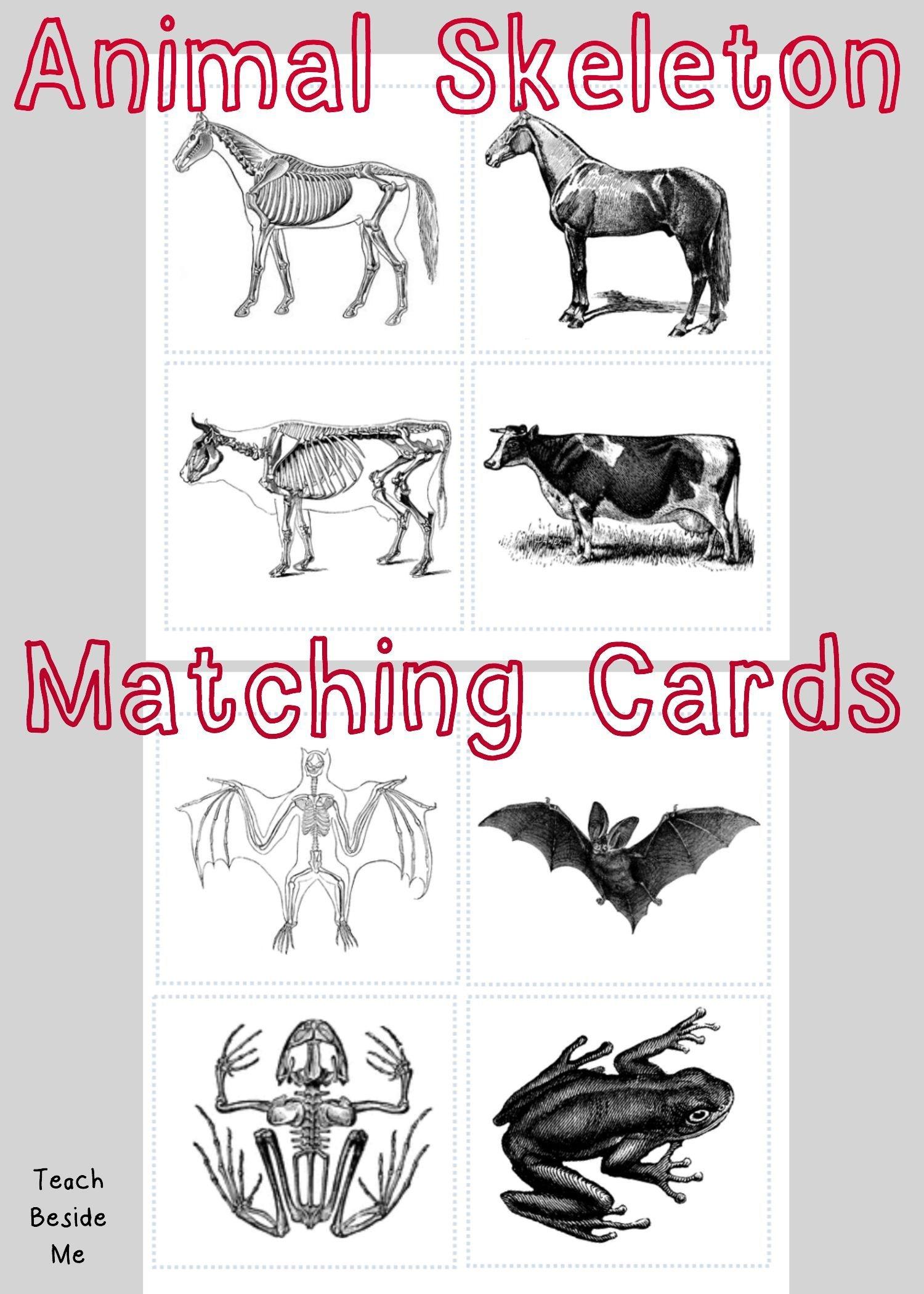 Animal Skeleton Matching Cards   Children: Nature, Science & Co - Free Printable Animal X Rays