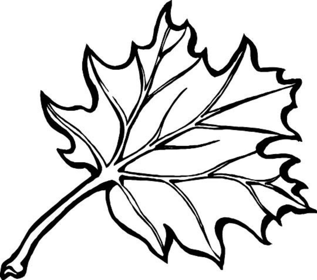 Autumn Borders Colouring Pages   Coloring_Pages   Fall Leaves - Free Printable Fall Leaves Coloring Pages
