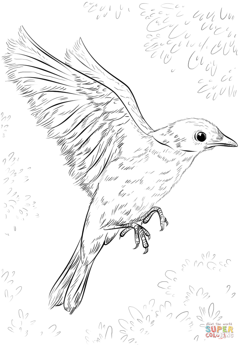 Blue Bird Flying Coloring Page | Free Printable Coloring Pages - Free Printable Images Of Birds