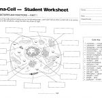 Cells   Mrs. Musto 7Th Grade Life Science   Free Printable Cell Worksheets