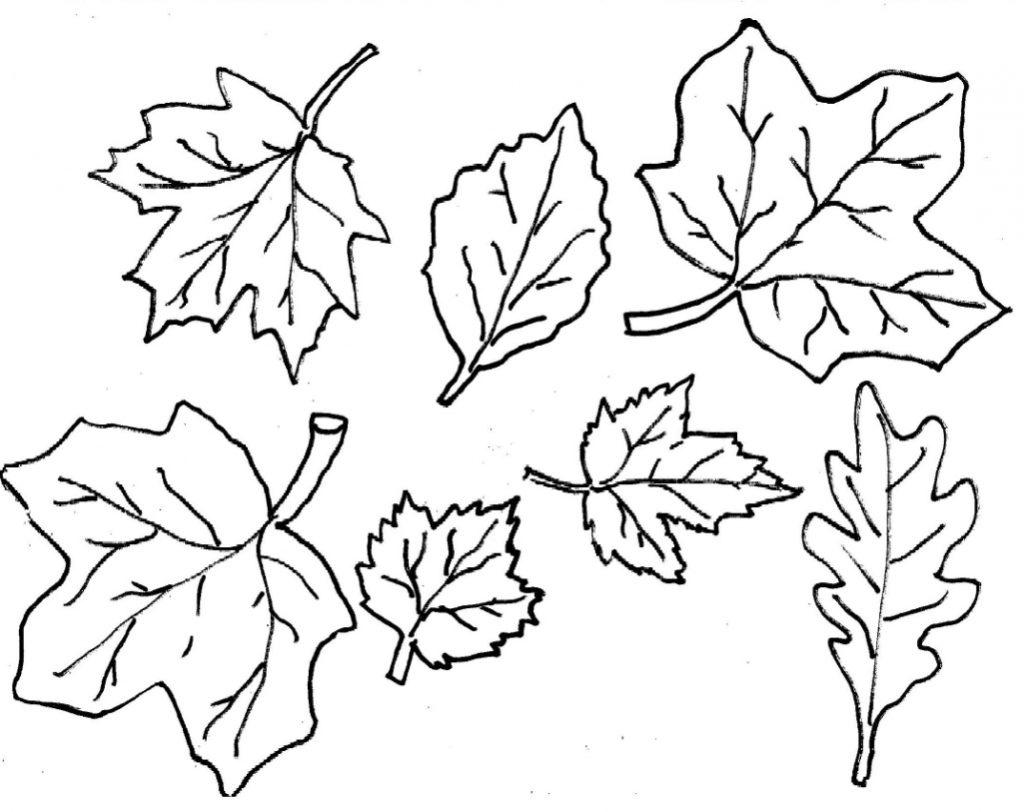 Coloring Book World ~ Maple Leaf Coloring Sheet Free Printable Pages - Free Printable Fall Leaves Coloring Pages