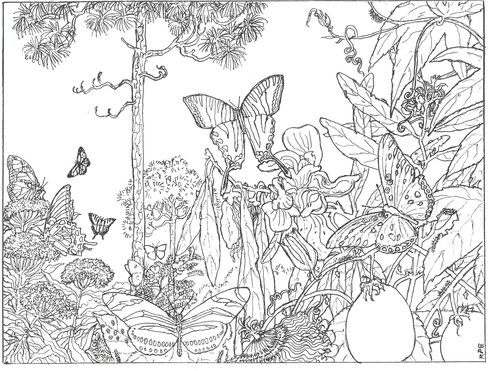 Coloring Ideas : Color Pictures Free Intricate Coloring Pages New - Free Printable Nature Coloring Pages