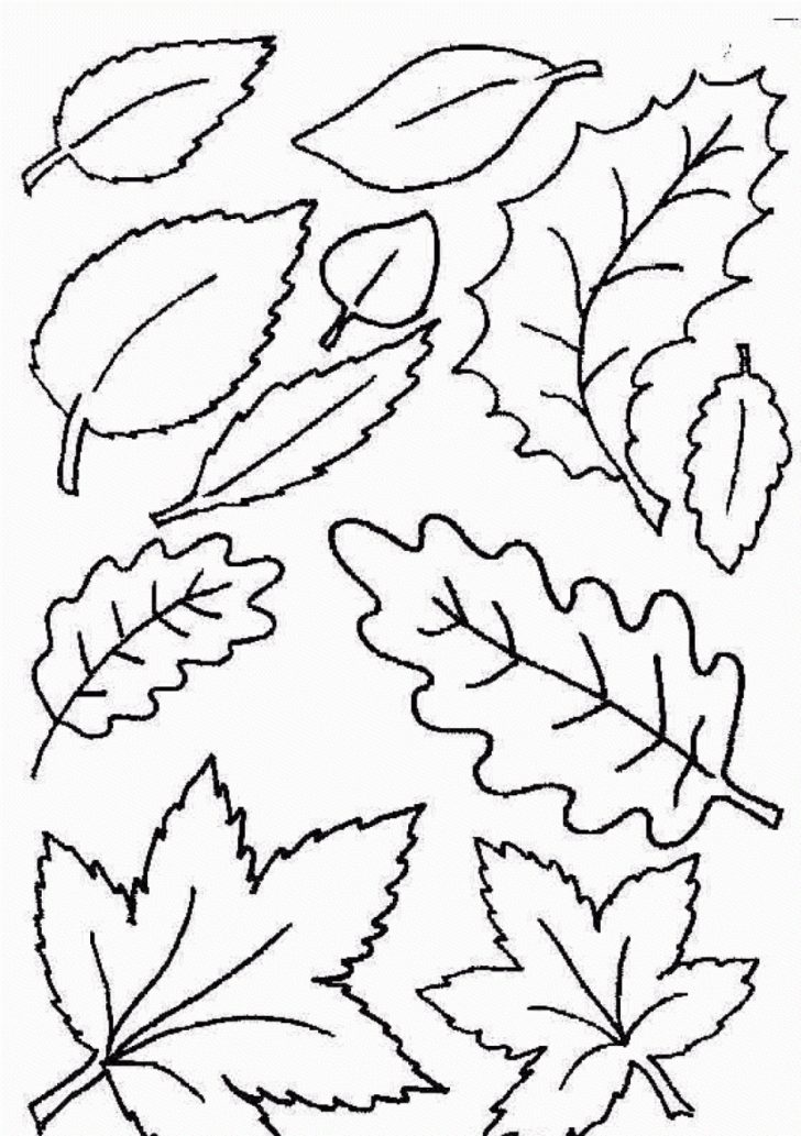 Free Printable Leaf Coloring Pages