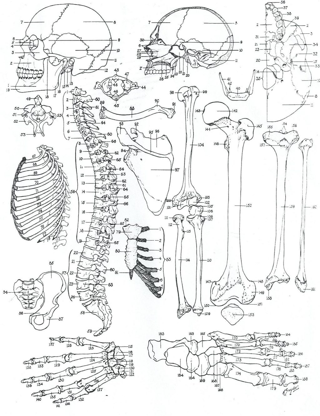 Coloring Page ~ Anatomy Coloring Pages Dechome Me And Book For Kids - Free Printable Anatomy Pictures