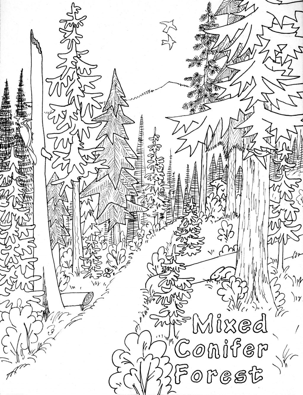 Coloring Page ~ Marvelous Nature Coloring Pages For Adults Page Free - Free Printable Nature Coloring Pages For Adults
