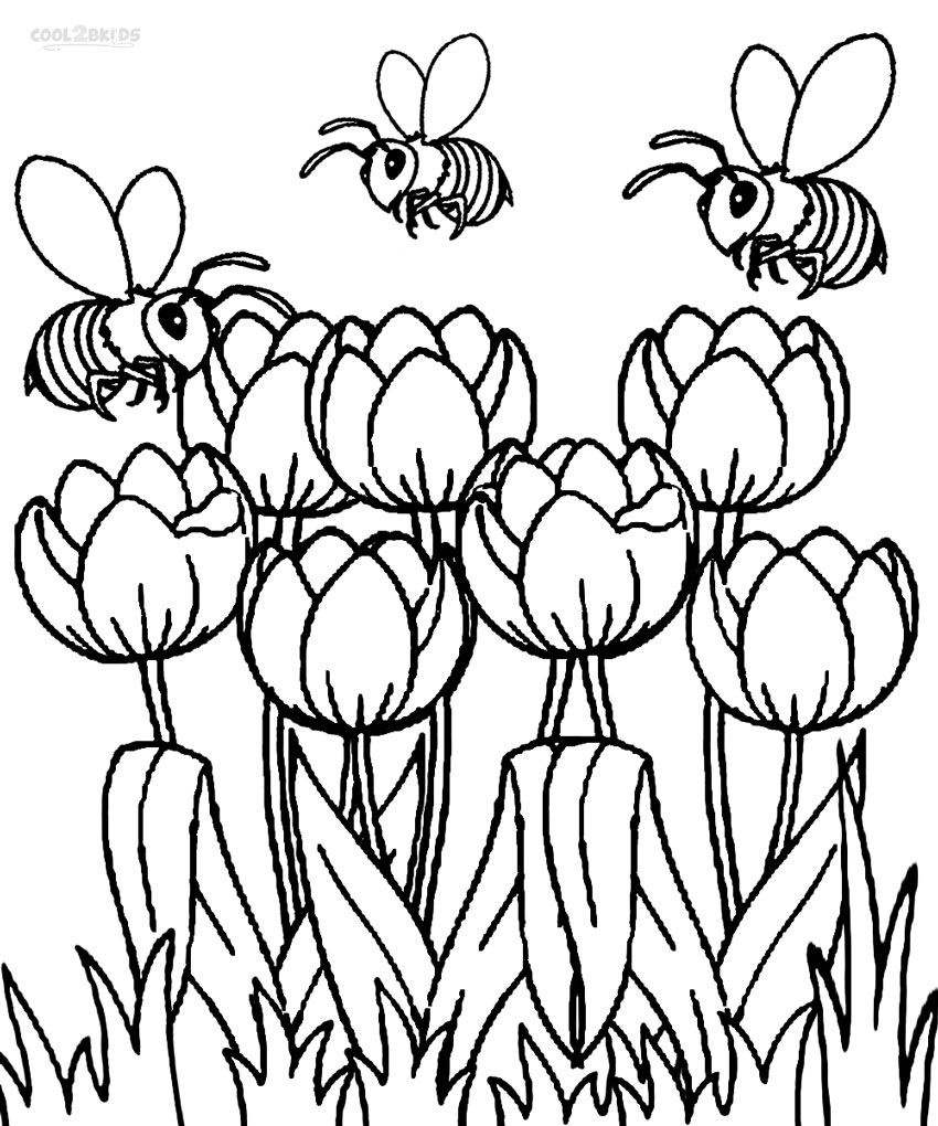 Coloring+Pages+Tulips   Printable Tulip Coloring Pages   Kids - Free Printable Tulip Coloring Pages
