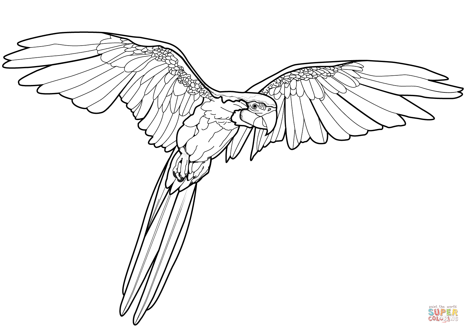 Flying Parrot Coloring Page | Free Printable Coloring Pages - Free Printable Parrot Coloring Pages