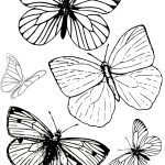 Free Printable Butterfly Colouring Pages | Bible Class | Butterfly   Free Printable Butterfly