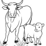 Free Printable Cow Coloring Pages For Kids | Cool2Bkids   Coloring Pages Of Cows Free Printable