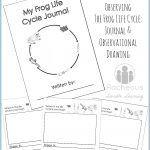 Free Printable Frog Life Cycle Journal | Science Notebooking   Life Cycle Of A Frog Free Printable Book