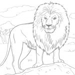 Free Printable Lion Coloring Pages For Kids   Free Printable Picture Of A Lion