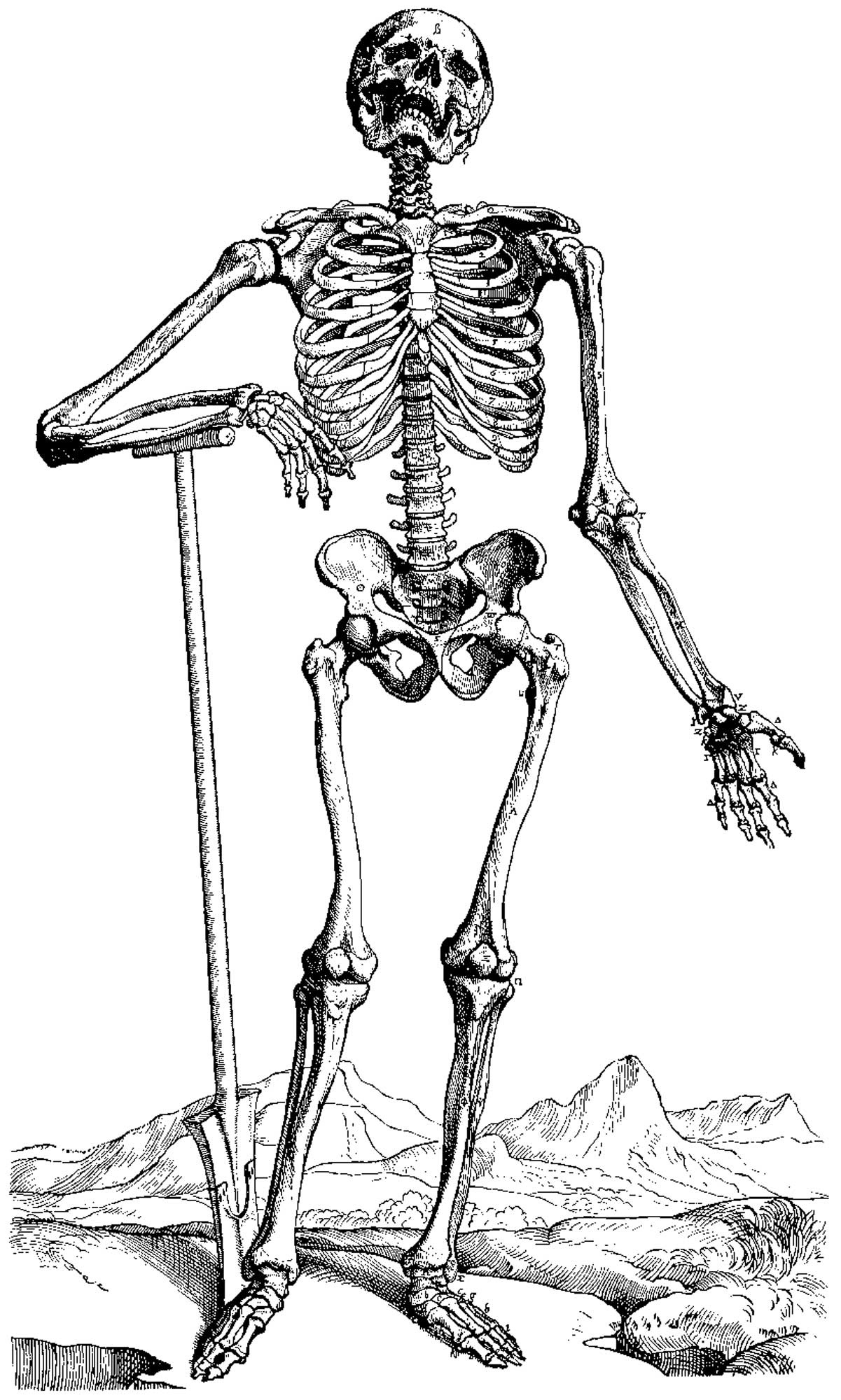 Free Printable Skeleton Coloring Pages For Kids - Free Printable Skeleton Coloring Pages