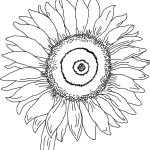 Free Printable Sunflower Coloring Pages For Kids | Auction Art   Free Printable Sunflower Template