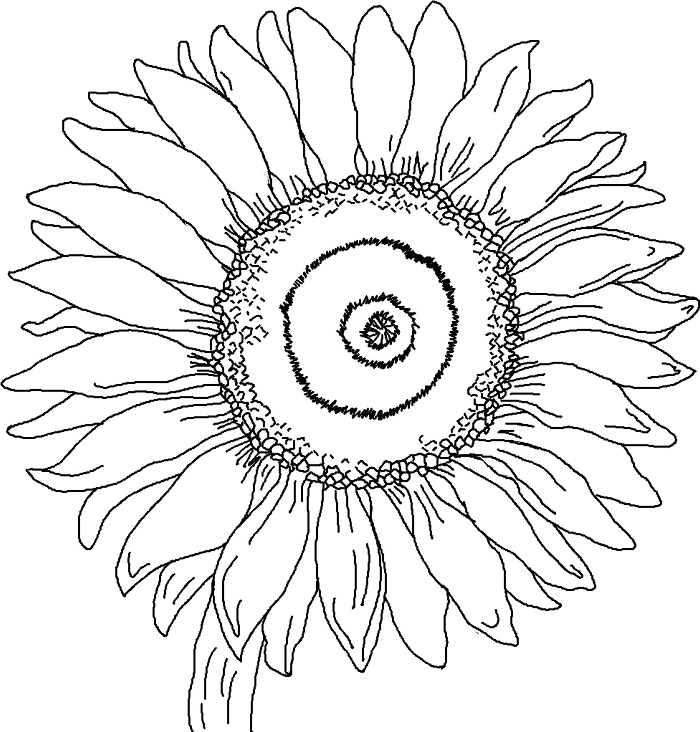 Free Printable Sunflower Coloring Pages For Kids | Auction Art - Free Printable Sunflower Template