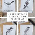 Free Printable Vintage Bird Line Art   Free Printable Images Of Birds