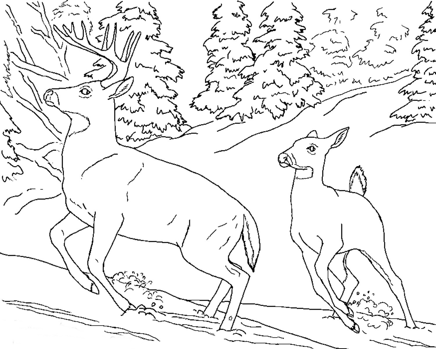 Free Realistic Animal Coloring Pages | Realistic Animal Coloring - Free Printable Realistic Animal Coloring Pages