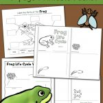 Frog Life Cycle Worksheets   Mamas Learning Corner   Life Cycle Of A Frog Free Printable Book