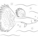 Guppy Coloring Page | Free Printable Coloring Pages   Free Printable Fish Coloring Pages