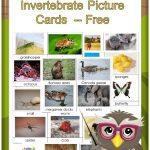 Invertebrates And Vertebrates Card Sort Free Pdf | Science   Free Printable Animal Classification Cards